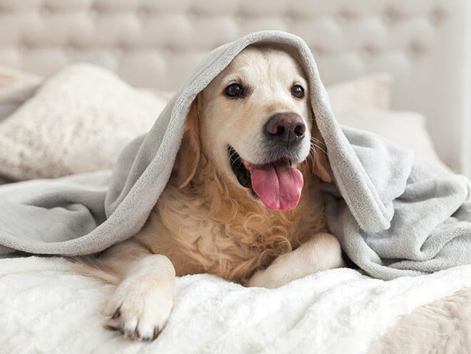 Is Bodega Coast Inn & Suites pet-friendly?